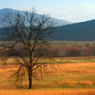 Picture - Landscape at Cades Cove, Great Smoky Mountains National Park.