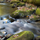 Picture - Roaring fork motor trail stream in Great Smoky Mountains National Park.