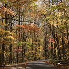 Picture - Canopy of trees in Great Smoky Mountains National Park.