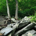 Picture - Rocks and trees in the Appalachians, Great Smoky Mountains National Park.