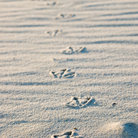 Picture - Prints in the Sand, Gulf Shores.