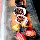 Picture - Cacao process is displayed from pod to chocolate.