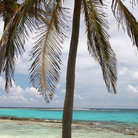 Picture - Palm trees, beach, and turquoise water of Half Moon Caye Natural Monument.