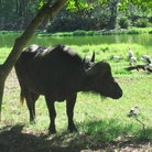 Picture - Animals at Haller Park.