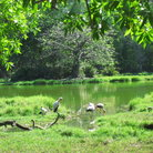 Picture - Birds at Haller Park.