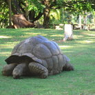 Picture - A tortoise at Haller Park.