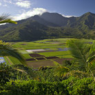 Picture - Hanalei Valley on Kauai hosts taro and sugar cane fields.