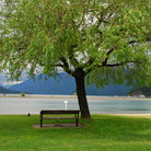 Picture - Park bench looking out at Harrison Lake.