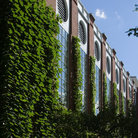 Picture - Ivy climbs a building on Harvard campus, Cambridge.