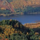 Picture - Pine trees around Lake Thirlmere.