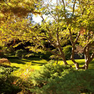 Picture - The lush botanical gardens at the Henry E Huntington Library and Art Gallery in San Marino.
