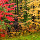 Picture - Fall colors in Hiawatha State Forest.