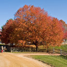 Picture - Fall scene in Holmdel.