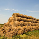 Picture - Hay bales in Hortobagy National Park.