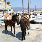 Picture - Horses tied up on the island of Hydra.