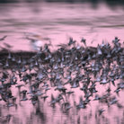 Picture - Flock of birds at the Ding Darling National Wildlife Refuge.