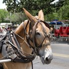 Picture - Horse and carriages in Jackson Square.