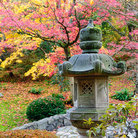 Picture - Beautiful colors at the Japanese Garden of Seattle.