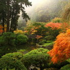 Picture - Seasons changing in Portland's Japanese Garden.
