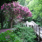 Picture - Flowering tree and old stone bridge at Jesmond Dene in Newcastle-upon-Tyne.