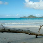 Picture - A log on Josiahs Beach on Tortola.