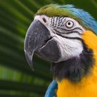Picture - A Macaw at the Parrot Jungle and Gardens in Miami.
