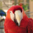 Picture - Parrot at Parrot Jungle south of Miami.