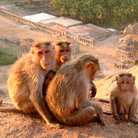 Picture - Monkey family in Hampi.
