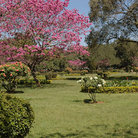 Picture - Cubban Park in Bangalore.
