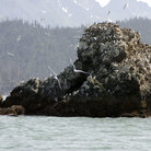 Picture - Island of Bird in Kachemak Bay, Alaska.