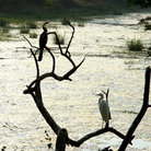Picture - Birds at the Bharatpur wildlife reserve.