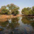 Picture - Wetland area of Keoladeo Ghana National Park.