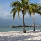 Picture - Palm trees on a beach in Key Largo.