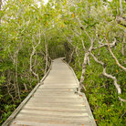Picture - Entrance to tropical creeks and mangrove swamps in Key Largo.