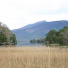 Picture - Grass on the waterfront at Killarney National Park.