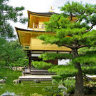Picture - Pine trees at the Golden Kinkakuji Temple or Golden Pavilion at Kyoto.