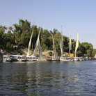 Picture - Feluccas docked at Kitchener's Island in Aswan.