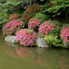 Picture - Garden near the Kyomizudera temple in Kyoto.