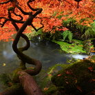Picture - Fall colors at the Kubota Gardens.