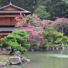 Picture - Blossoms at a garden near the Imperial Palace in Kyoto.