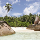 Picture - Palm trees at Anse Coco on La Digue Island.