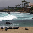 Picture - A beach of seals in La Jolla.