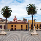 Picture - Palm trees in a plaza at La Orotava.