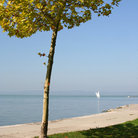 Picture - Shoreline of Lake Balaton.