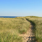 Picture - Trail leads to Lake Michigan through the samd dunes.