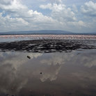 Picture - View across Lake Nakuru.