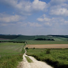 Picture - Dirt road through lambourn downs.
