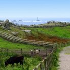 Picture - Farm on Land's End.