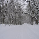 Picture - Snowy Road in Dolliver Memorial State Park.