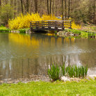 Picture - Pond in Buck Garden, Far Hills, New Jersey.
